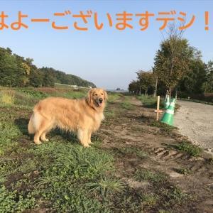 2019年秋、屈斜路湖和琴半島キャンプ!そのⅡデシ(^-^)/
