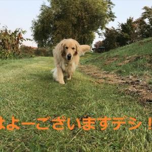 10月なのに「夏日」の北の国デシヨ(#^.^#)