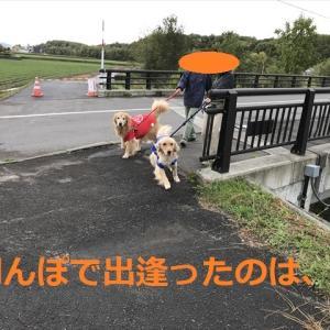朝ゴル&夕(ゆう)パピゴル&やったね日本デシネ\(^o^)/