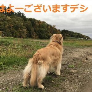 やったね日本!!ルルしゃんともノーサイドでしよ(#^.^#)