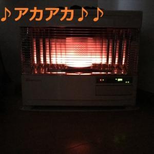 今シーズン初の「氷点下」の朝とゴル兄弟デシ(^∇^)