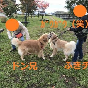 新しい散歩路デシヨ\(^o^)/