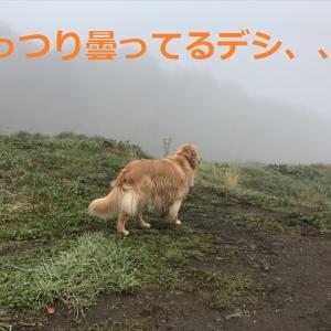 お久しぶりのハスキーズo(^▽^)o