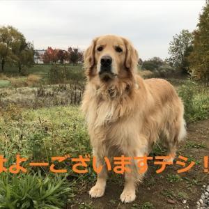 「ゆーとぴあ」デシネ\(//∇//)\