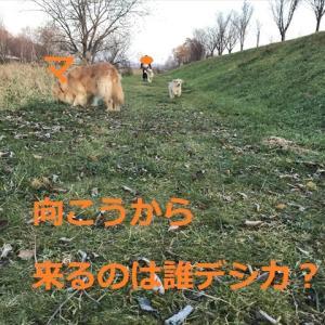 朝っぱら「ゴルゴル貰い隊」デシネ\(^o^)/