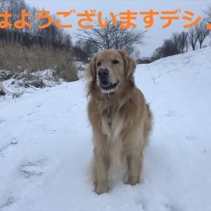 ルルしゃんが変身デシネ!?(#^.^#)