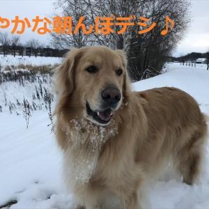 明日はお楽しみデー♪♪でし\(^o^)/