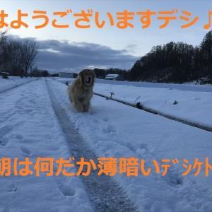 生「〇っち嬢」来る!?デシ\(^o^)/