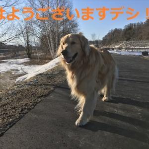 お久しぶり姫と泥んこ兄弟の巻きデシ(#^.^#)