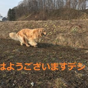 冬バージョンから春夏バージョンへ!デシ∠( ^ o ^ ┐)┐ ヨォ…