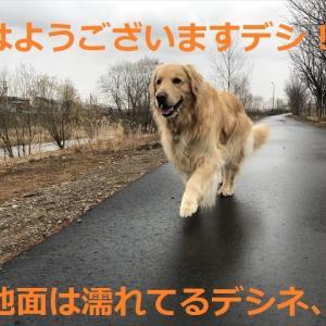 お散歩だけの日曜日デシヨ(^-^)/