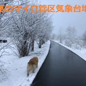 4月6日(シロの日)に白く為ったデシ(#^.^#)