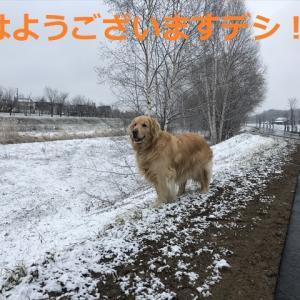 隠れたコン吉を見つけたデシ(^-^)/