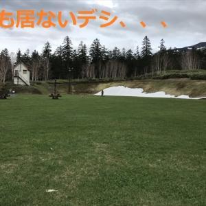 NO密なお出掛けさんぽは「お山」デシ(#^.^#)