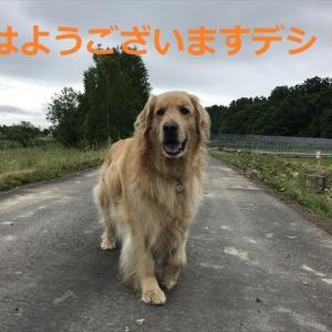 さあここからラッキー運勢の始まりデシネ\(^o^)/