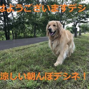 3日目で検証完了デシネBY白線王子(^-^)/