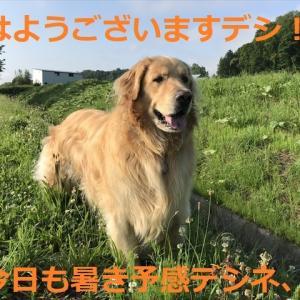 お山涼み🍺ビールキャンプそのⅡ、、終わり編(^-^)/