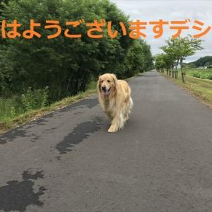 昨日までとは違って涼しい朝んぽデシヨ、7月22日(=∀=)