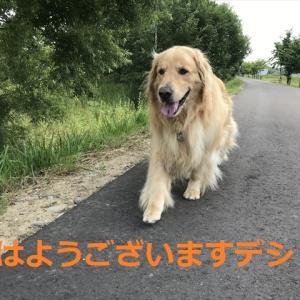 2020年夏!海までドライブ完結編デシ\(^o^)/