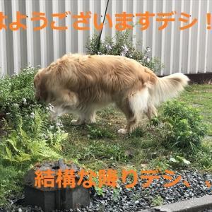 パピバニとソーシャルなんちゃらデシネ\(//∇//)\
