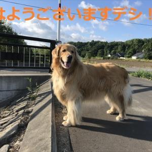 とうちゃん朝から、感激&感動デシヨ\(^o^)/