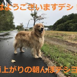 今年の「初物」頂きましたデシ、、きのこ編o(^▽^)o