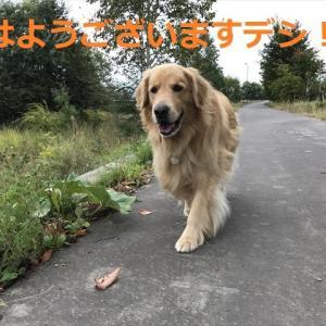 「ワンフェス」で衝撃映像!?がデシ(〃▽〃)