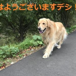 「オトコ同士」さんぽもいいものデシネ\(^o^)/