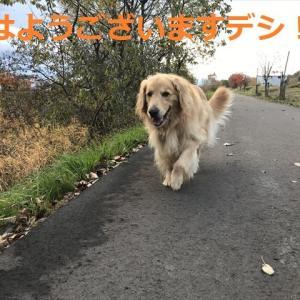 朝んぽで「遊んだ!」デシヨ\(^o^)/