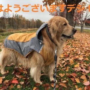流行りものには乗っかるデシ(#^.^#)