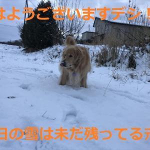 「煉獄さん」カラーのキラキラオトコ✨✨✨参上デシ(#^.^#)