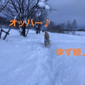 今朝の「雪玉クィーン」は、、、!?(ノ゚ω゚)ノ*.オオォォォォォォォー