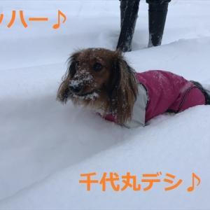 大雪警報に付き、、、((((;゚Д゚)))))))