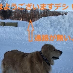 積もり過ぎの朝んぽデシヨ((((;゚Д゚)))))))
