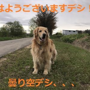 今日「愛犬の日」に改めて思う事デシ、、(^-^)/
