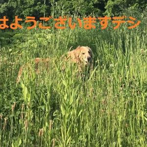 やっぱり「お山」は気持ち良いデシネ\(^o^)/