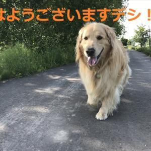 真夏日だった今日デシヨ(^-^)/