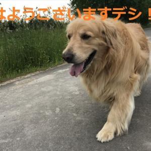 ルピルピな季節!?デシネo(^▽^)o