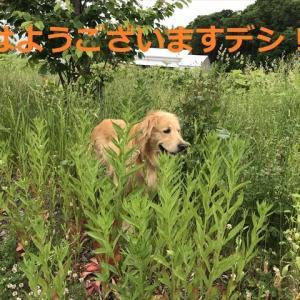 「この木何の木?」から「夜が来る♪」デシ、、(#^.^#)