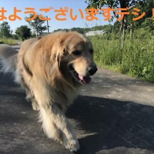 眩しい昼間だったデシネ(#^.^#)