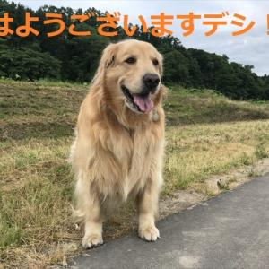 ♪♪あるぅ日ぃ~森の中ぁ~♪♪の話しデシ(#^.^#)