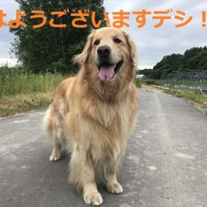円熟の表情デシネ!?(=∀=)
