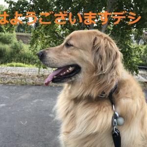 今日から通常業務に戻ったデシヨ(〃▽〃)(#^.^#)