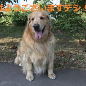 7月度の連続真夏日「12日間」更新チウ!デシヨ、、(〃▽〃)