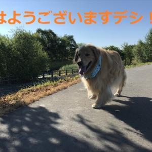 ついに暑さに「やられた!?」デシヨ、(=∀=)(=∀=)