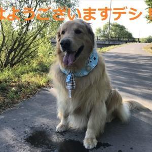7月最終日に「ドカーン!」と来たデシネミ☆⌒ヽ(*゚ロ゚)ノ