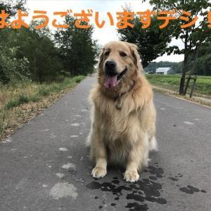 マイロ家お家から「サプライズ!?」だったデシヨ(#^.^#)