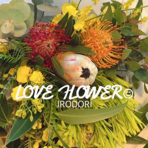 *世界の花屋の定期便!2月はスペイン ラ・パルマ島から届いたプロテアホワイトナイト*