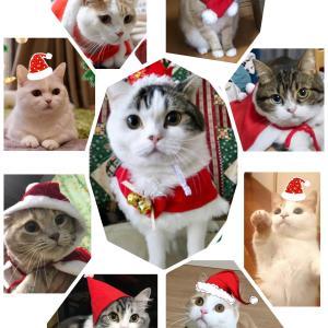 まんちの樹 猫親戚さんのクリスマス