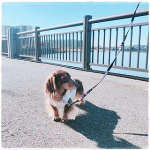 リロと散歩